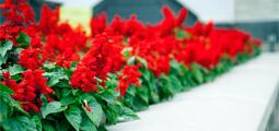Живые цветы оптом в украине необычные подарок на день рождения мужчине