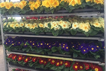 Живые цветы оптом со склада хорошие конфеты в подарок мужчине