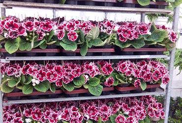 Купить оптом цветы комнатные цветы с доставкой питер