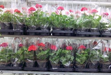 Склад магазин склад цветов, купить обруч с цветами на олх