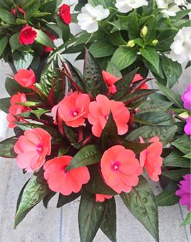 Купить комнатные цветы оптом украине где можно купить картины уральские самоцветы недорого