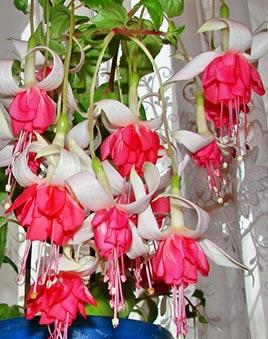 Оранжереи украина купить цветы какой подарок подарить турецкому мужчине